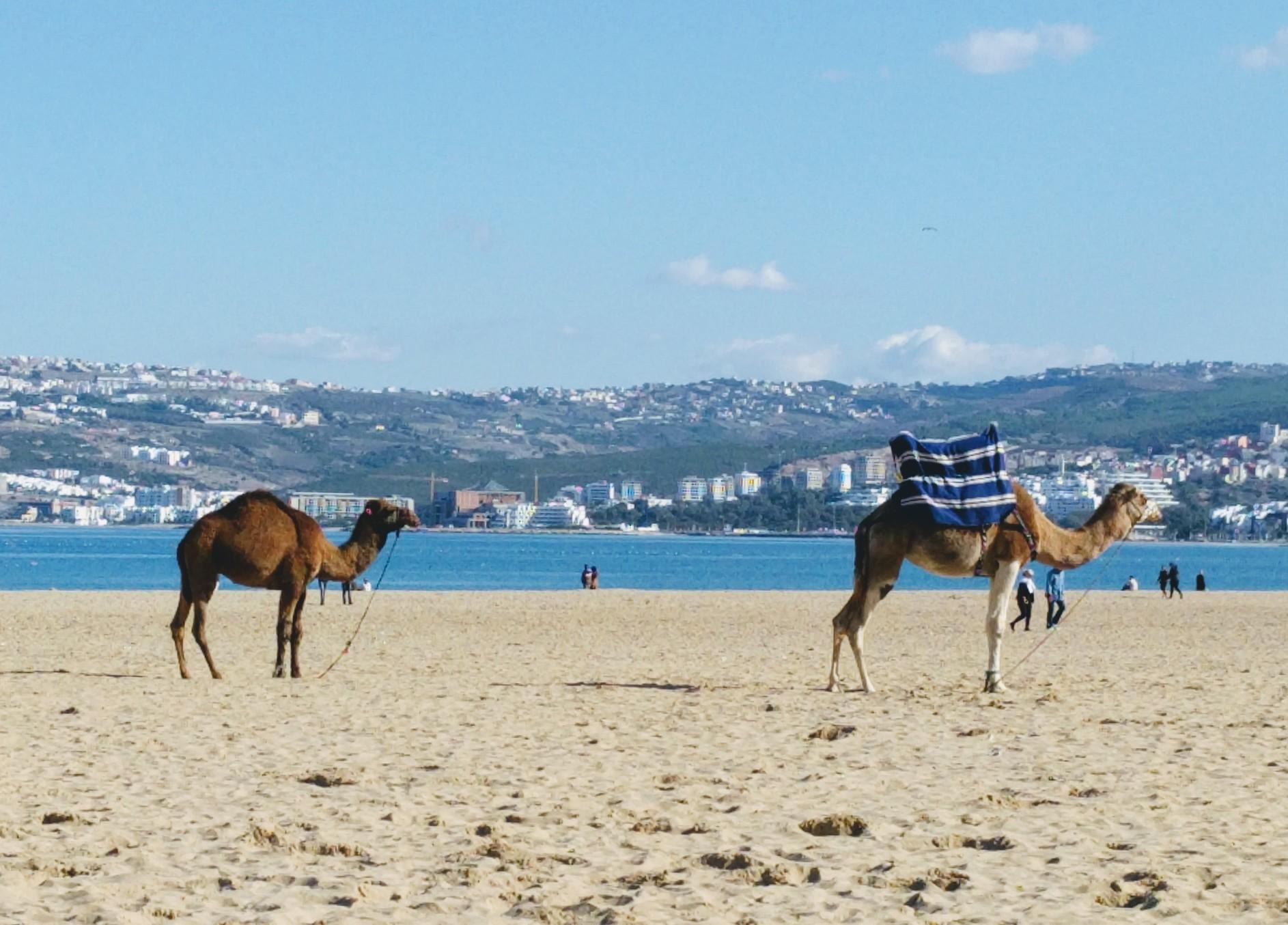 /images/morocco-camels.jpg