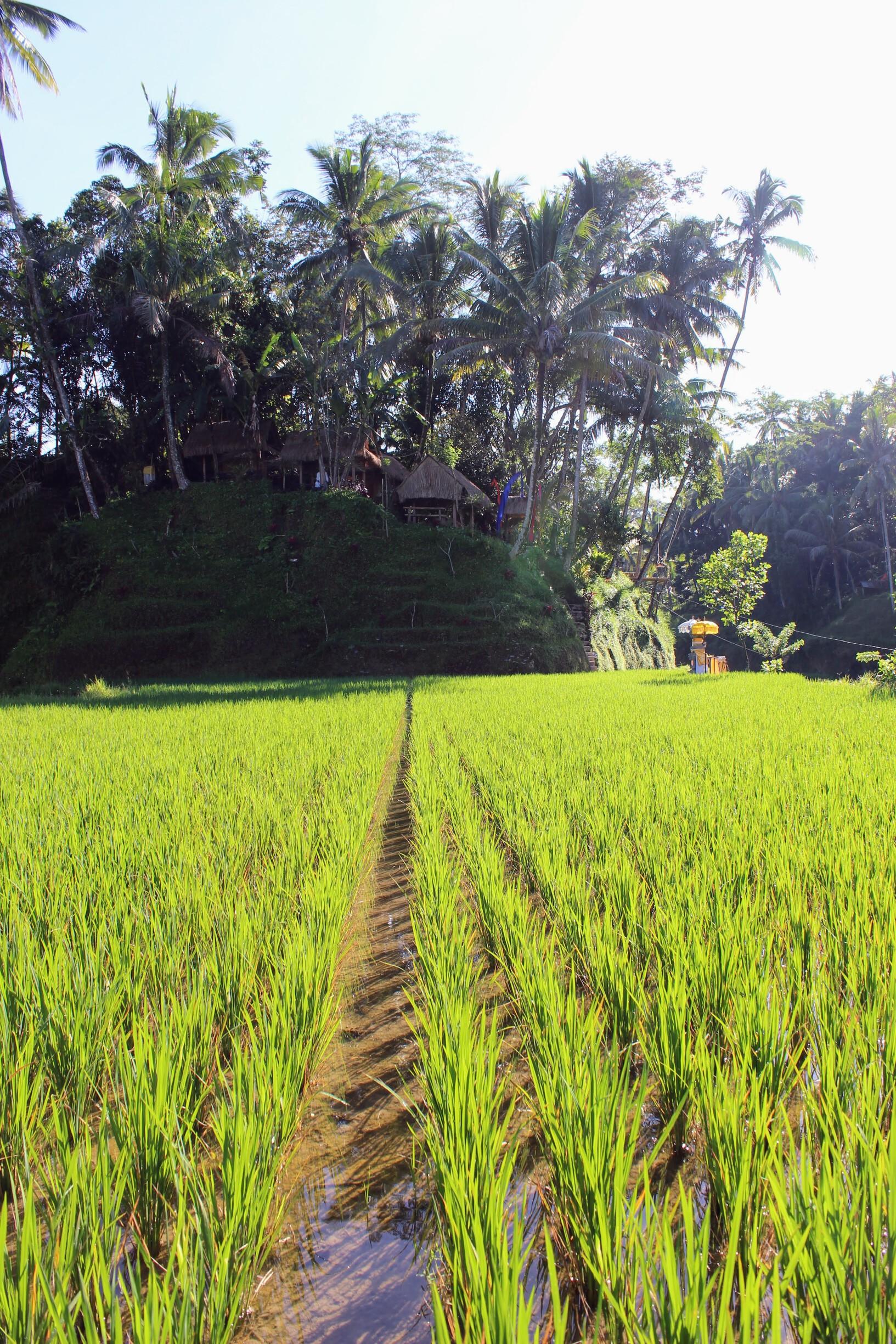 /images/treat-rice_terraces1.jpg