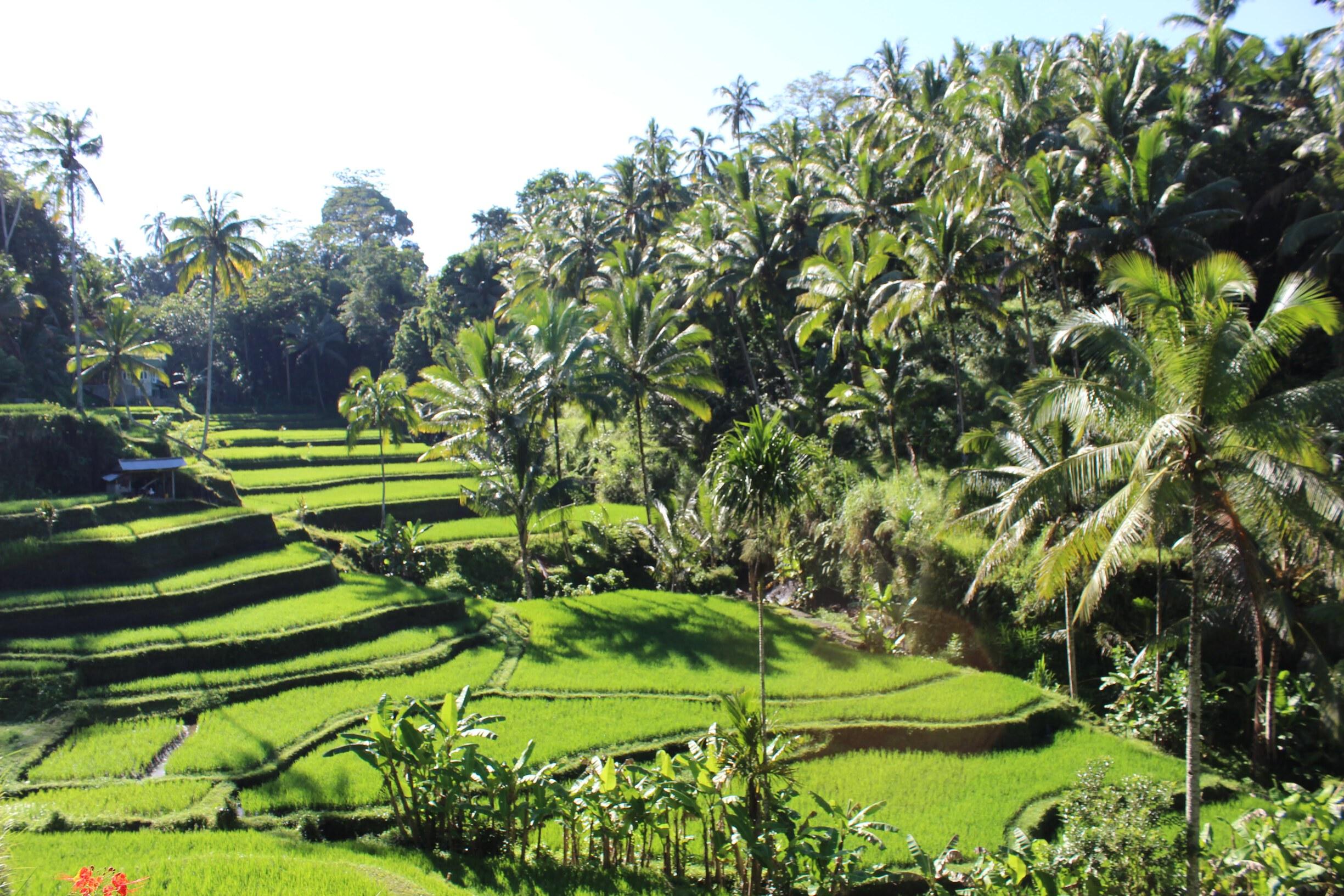 /images/treat-rice_terraces2.jpg